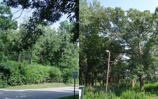 Nature park before(l) and after(r) restoration