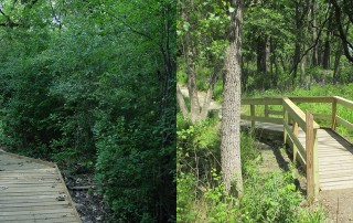 Boardwalk before(l) and after(r) restoration. The area is now full of sunlight and flowers are thriving. Justin G added handrails on the boardwalk to make it safer.