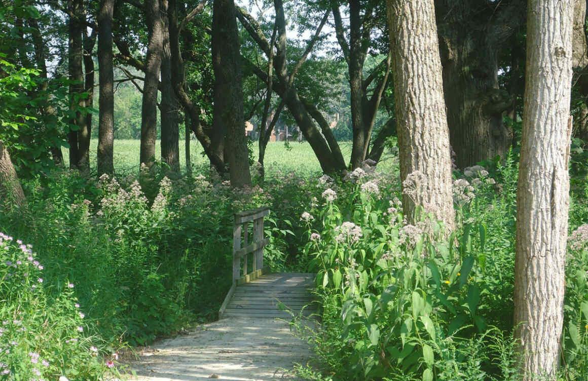 nature area entrance path
