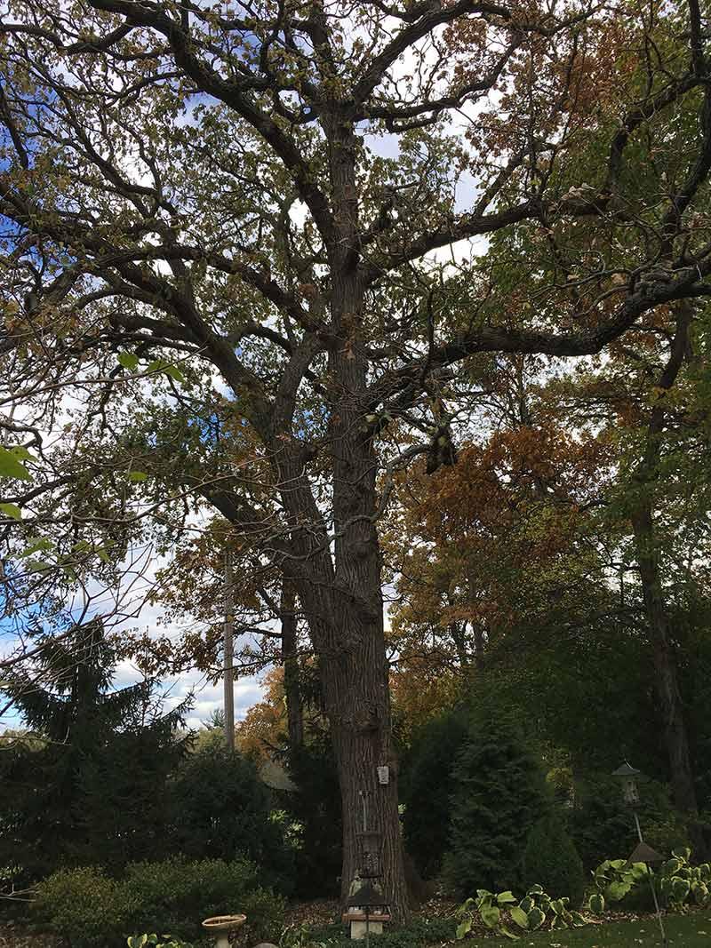 Heritage Oak at 8 Lagoon Drive, Hawthorn Woods, IL